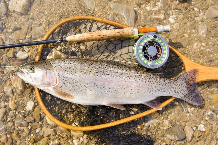 Helicopter Trout Fishing Trips
